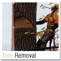 Tree Removal Oakville - Home Box 5